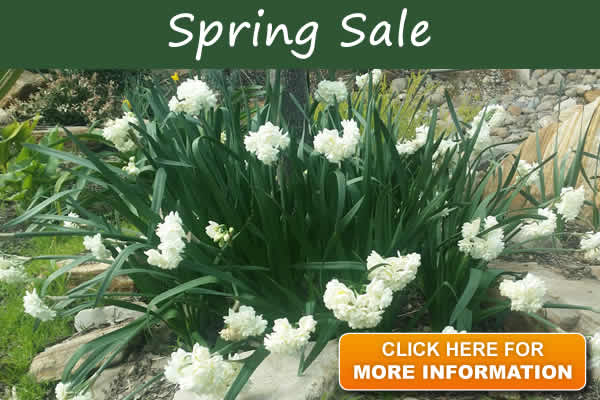 Spring Sale now on - Save even more